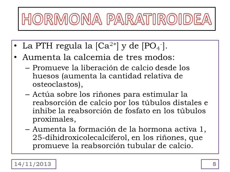 HORMONA PARATIROIDEA La PTH regula la [Ca2+] y de [PO4-].